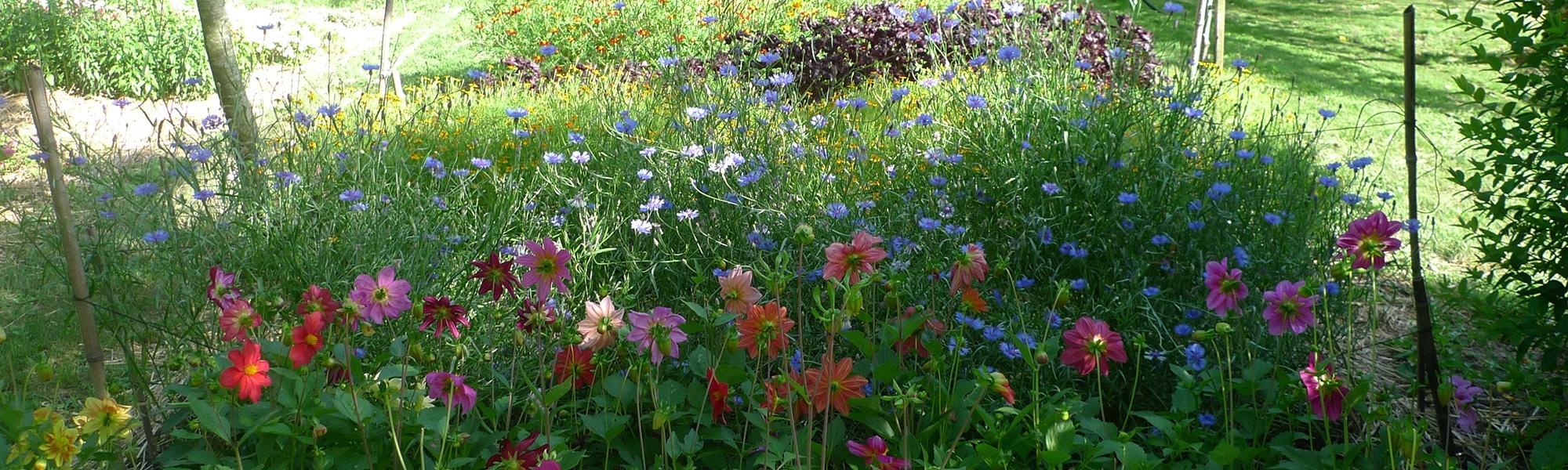 Broutilles Poitiers Jardin